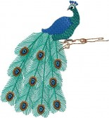 CSS409 - Beautiful Peacocks